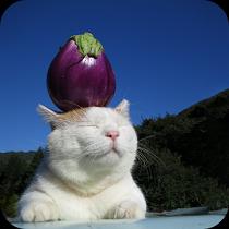 のせて のせ猫 アイコン