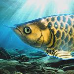 稚魚から育てるアロワナ アイコン